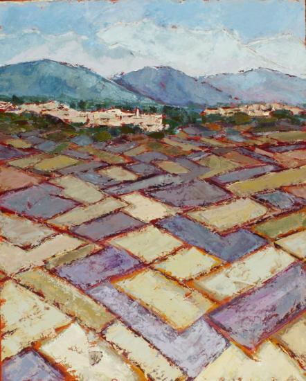 lavandes-dans-la-plaine-de-sault-10-2003-30f.jpg